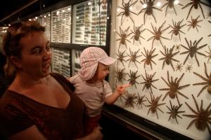 Spider collection, La Vanille