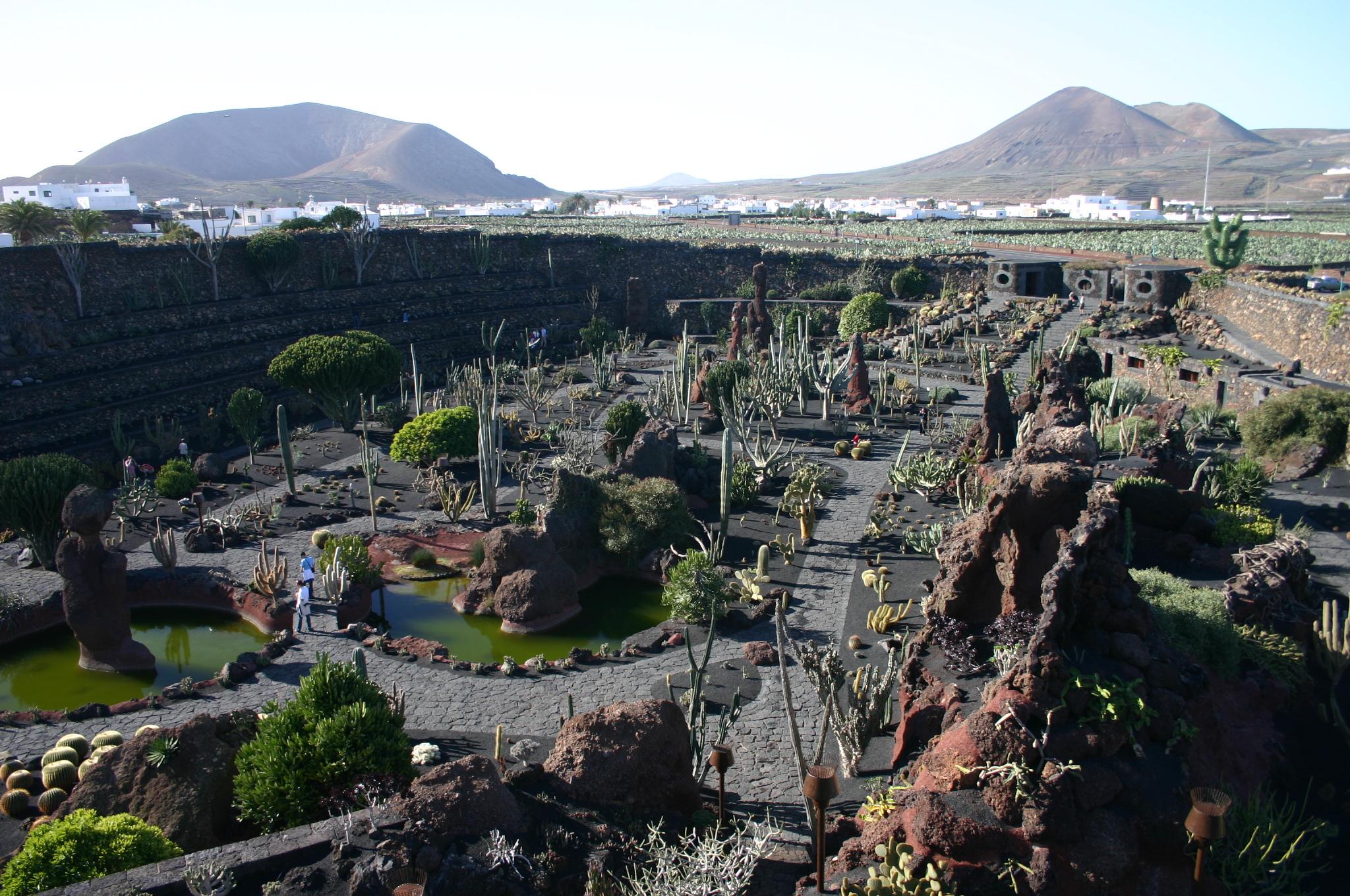 The trunki files guide to short haul winter sun canary - Jardin de cactus ...