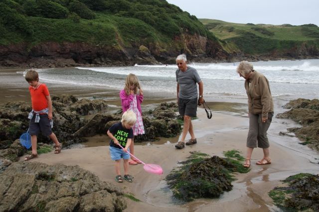 Rockpooling, Hope Cove