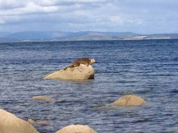 Seal at Corrie