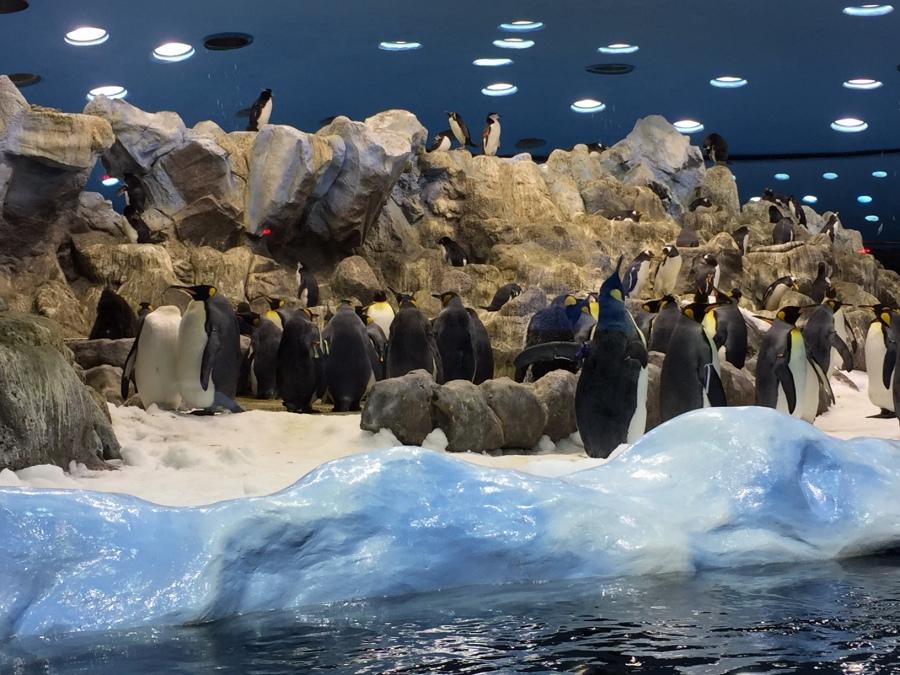 Penguinarium, Loro Parque